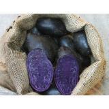 Kartoffelrarität Blaue Anneliese, festkoch., kräftiger Geschmack tiefblau-lila