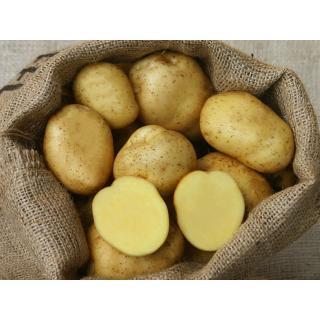 Kartoffelrarität Ackersegen - mehlig, butteriger Geschmack, runde helle Knolle