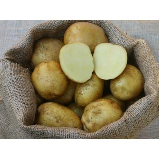 Kartoffelrarität Augsburger Gold,  vorw. festkochend, runde helle Knolle