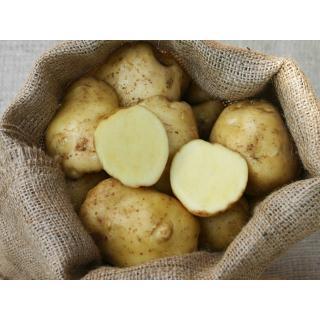 Kartoffelrarität la Bonneotte, sehr cremiger feiner Geschmack, eckig-rund