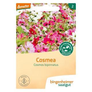 Cosmea-Saatgut