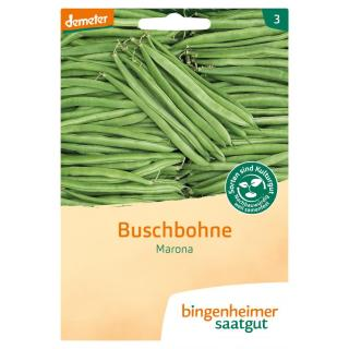 Saatgut Buschbohnen