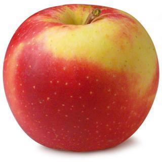 Äpfel Elstar   demeter Schlachtenberger