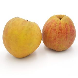 Äpfel Boskop- alter roter Boskop Apfel